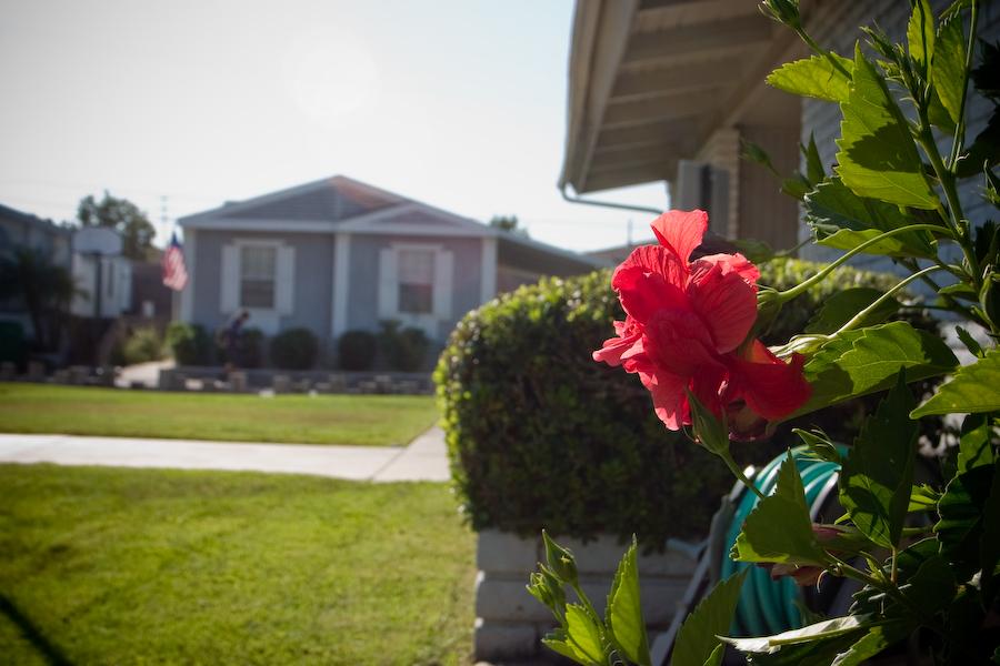 Santiago Creekside Estates flowers